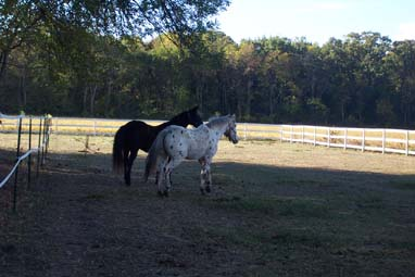 Horses in Field Photo 3